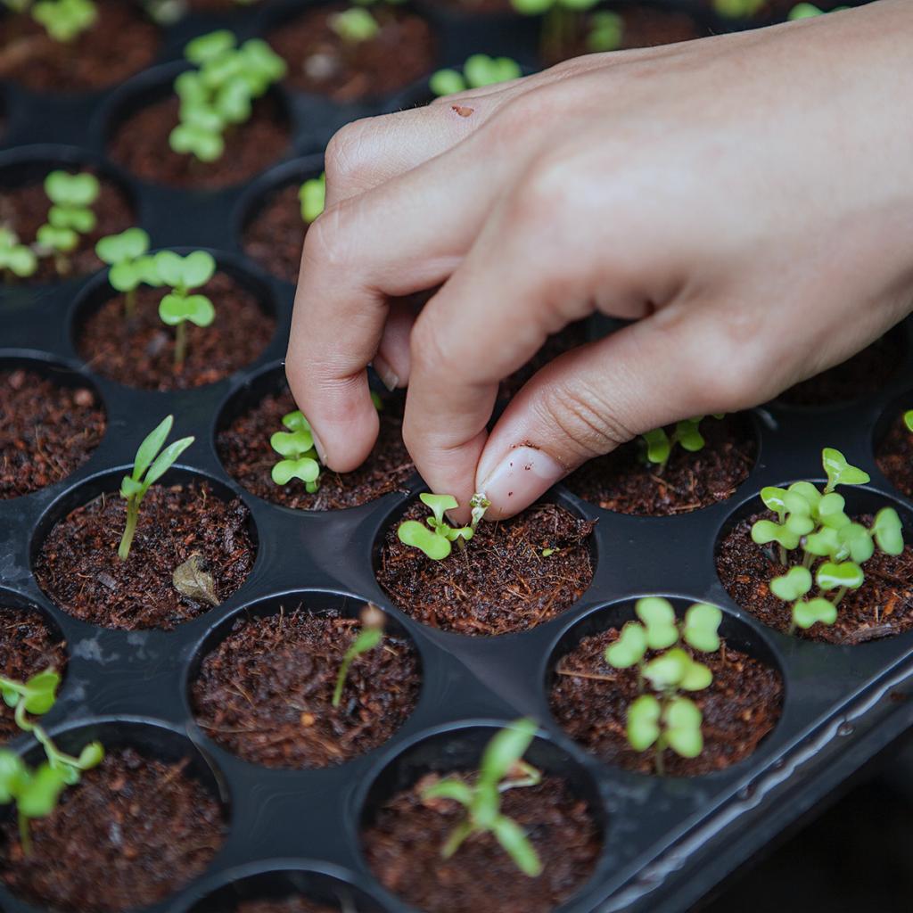 Por que os alimentos sem agrotóxicos são melhores para o meio ambiente?