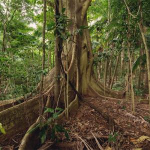 O Brasil tem a maior biodiversidade nativa do mundo